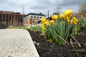 SofWP flowers April 13-5957
